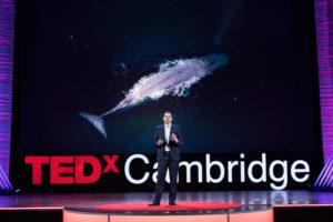 TEDx Cambridge, 2018: How to fix our Godzilla problem